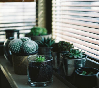 Should You Pick Timber Venetian Blinds or PVC Venetian Blinds for Your Home